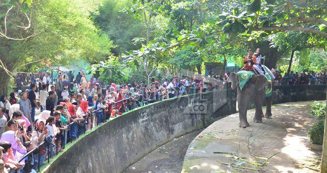 Tempat wisata taman rimba mulai ramai dikunjungi wisatawan sejak dibuka. Pada libur Lebaran Idul Adha, sehari pengunjung lebih dari seribu orang.Wahana menaiki gajah juga sudah dibuka.