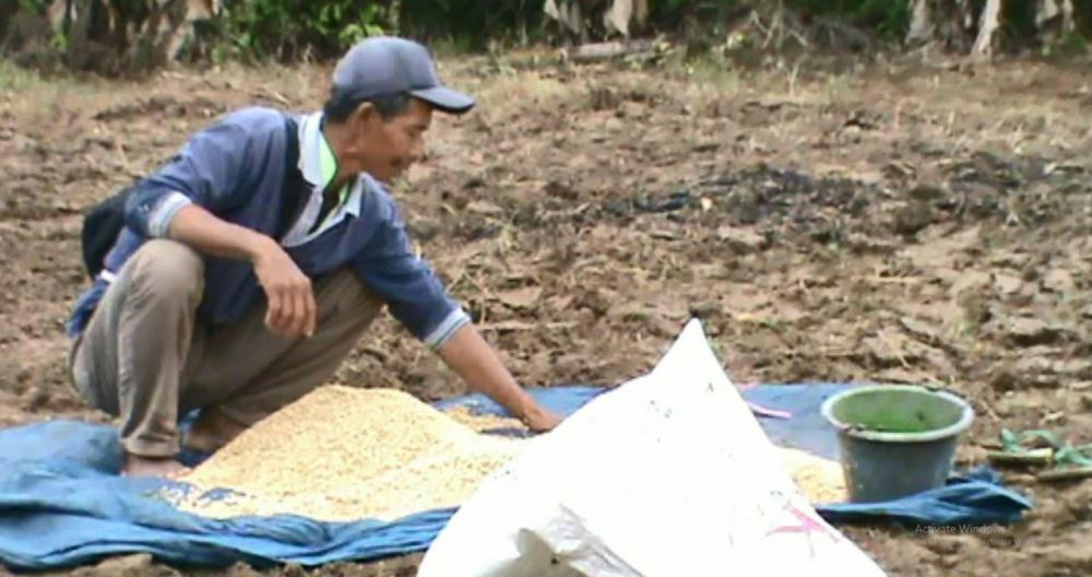 Petani padi di Kecamatan Rantau Rasau tepatnya di Desa Marga Mulya, saat menyemai padi.